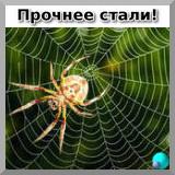 Паук на своей сверхпрочной сети из паутины