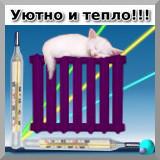 Кот на радиаторе